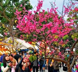 桜並木とたくさんの出店を楽しむ来場者たち=31日、名護市大東(浦崎直己撮影)
