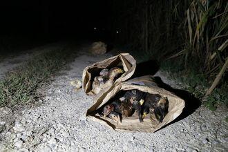 袋に詰められ南部の農道に捨てられていたシャモ(本田さん提供)