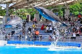 観客の前で豪快なジャンプを披露するイルカ=1日午後、本部町・海洋博公園(伊禮健撮影)