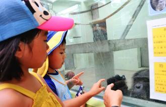 「すぐる」と遊ぶ子どもたち=11日、沖縄市・沖縄こどもの国