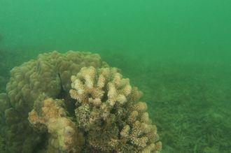 写真3 大雨が降り赤土が流れ込んだ海の中。普段の透明度は20メートルほどだが、このときは1メートル先も見えにくい状態になっていた。2013年10月19日、とかしくビーチで撮影