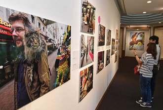 展示されたネコの写真に見入る来場者=6日午前、浦添市美術館