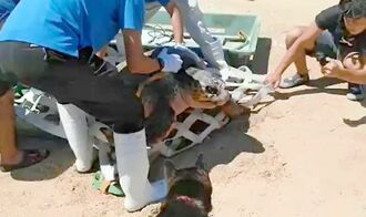 水族館の職員らによって海に放されるアカウミガメ=14日、糸満市喜屋武(徳村さん提供)