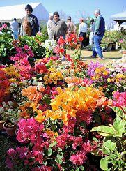 色とりどりの草木が並ぶ会場=6日、沖縄市登川、市農民研修センター