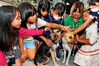子どもたちにかわいがられるワン'sパートナーの会の犬たち