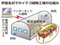 初心者にも対応、イチゴをITで遠隔栽培 沖縄の島に整備される植物工場の特色