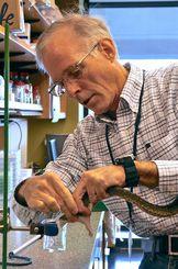研究室でハブから毒液を採取するスティーブン・エアド博士(OIST提供)