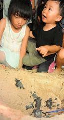 海に向かおうと砂をかき分ける子ガメに見入る子どもたち=16日午後9時すぎ、石垣市内