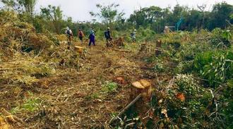 伐採が進むヘリパッド建設予定地G地区=5日、国頭村安波(提供)