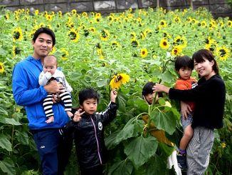 コスモスとヒマワリの花を見に来た家族=北中城村荻道区