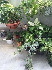 「ジャングル気分でるんるん」ベランダの植物に紛れてて、かわいかったので撮りました。
