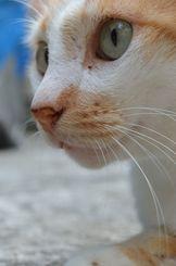 「まなざし」2年前の7月、桜坂の街中で