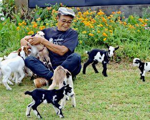 仲西さんと戯れるミニボアヤギ=14日、うるま市石川山城・ミニボア太陽牧場