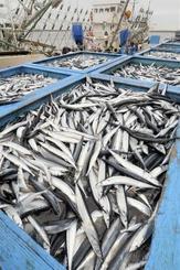 福島県いわき市の小名浜港に水揚げされたサンマ=2018年9月