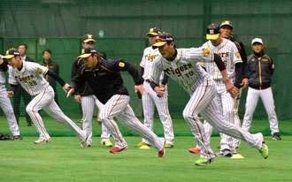 ウォーミングアップで汗を流す藤浪晋太郎(手前右)ら阪神の選手=1日、宜野座ドーム