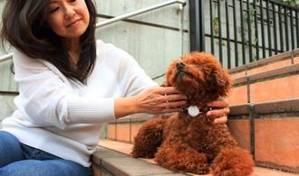 ペットの首輪に装着して健康を管理する「ハロペiz」(レキサス提供)