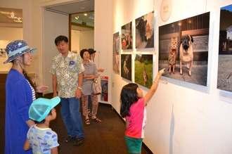 お気に入りの写真を指さしながら、かわいらしい猫を楽しむ入場者=26日、浦添市美術館