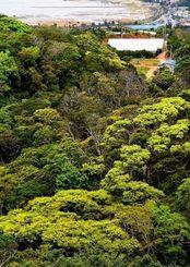 新緑が芽吹き、黄緑色に彩られた山=5日午前11時すぎ、恩納村恩納(金城健太撮影)