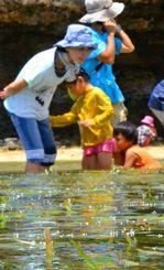 水面を滑走するウミショウブの花に見入る親子連れら=石垣市野底