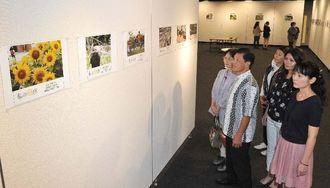 読者が投稿し「私の一点」に掲載された写真に見入る来場者=16日、那覇市久茂地・タイムスギャラリー