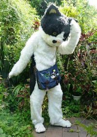 あのフジロックフェス出演の「むぎ(猫)」って、どんなアーティスト? 本人と飼い主さんに聞きました