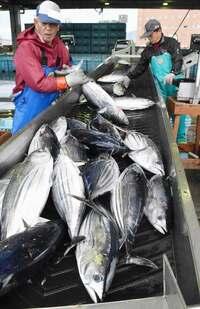漁業会合、日本の主張届かず マグロ漁獲枠超過で説得力欠く