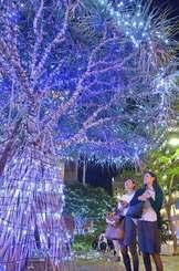 色鮮やかな電飾で年の瀬の街を彩る「くもじイルミネーション」=11日午後6時半ごろ、那覇市久茂地(下地広也撮影)