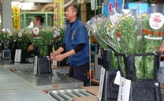 清明祭シーズンに合わせて県内消費を増やそうとキクの競りでアピールした=30日、県中央卸売市場