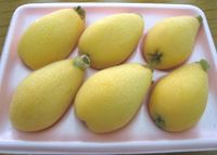 日本一早い露地栽培、沖縄市のビワ 「味も形も高品質」出荷ピーク