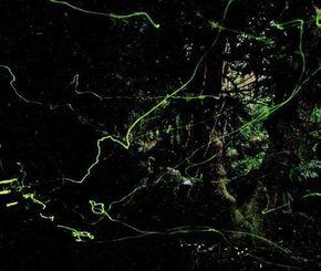 末吉公園で幻想的に舞うホタル=14日午後7時47分、那覇市首里末吉町(伊藤桃子撮影、約6分露光)