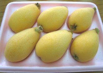 県内一の生産量を誇る沖縄市産のビワ。大きく、うま味が凝縮されているのが特徴