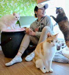 保護猫とたわむれる石垣深樹さん=17日、宜野湾市大謝名の保護猫カフェ「ヌーベルバーグ」