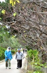いつもより多めに着込みウオーキングをする男性=8日午後、那覇市・漫湖公園