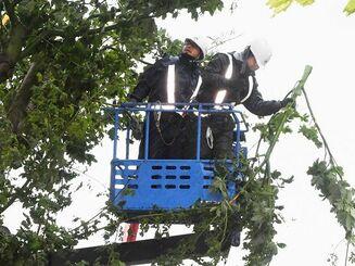台風で電線に絡まった木の枝を取り除く作業員=1日午後2時46分、浦添市大平(国吉聡志撮影)