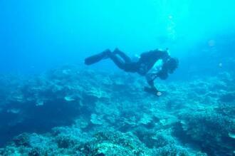 サンゴを調査するダイバー(日本自然保護協会提供)