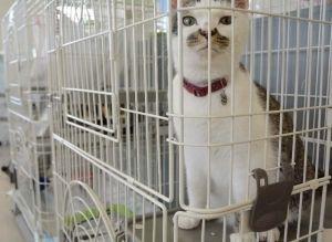 人懐こい雄の猫。施設内では動物たちが新しい飼い主が訪れるのを待っている=南風原町新川・エコマール那覇
