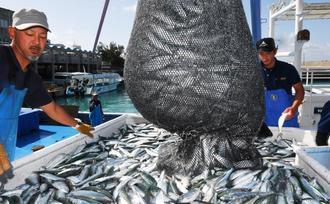 青空の下、ミジュンを水揚げする漁師たち=3日午前9時半ごろ、読谷村・都屋漁港(国吉聡志撮影)