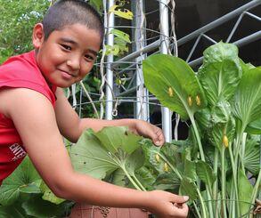 孫の義大樹さんと観葉植物の葉裏にぶら下がっているオオゴマダラのさなぎ=9月22日、本部町・仲宗根吉男さんの自宅