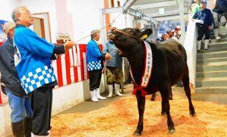 子牛と成牛計409頭が競りにかけられ、高値で取引された初競り=17日、糸満市・南部家畜市場