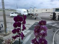 マニラ―那覇 9月に臨時便 フィリピン航空