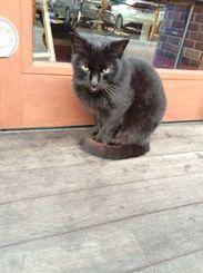 「じーじ(猫の名前)」アルバイト先へ出勤するとき、お店に来店してた猫を撮影