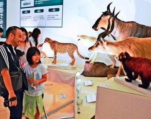 哺乳類の剥製を間近に見て喜ぶ親子=5日、那覇市の県立博物館・美術館