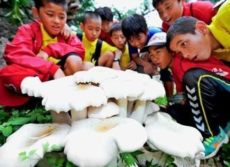 巨大キノコを見て驚く小学生ら=3日午前・那覇市牧志・希望ヶ丘公園