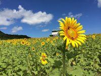 8月の沖縄 記録的な猛暑と少雨 このまま続くと…
