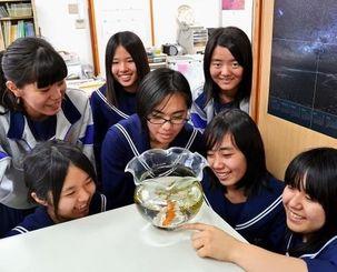 金魚「ムサシ」(円内)をかわいがる受験生ら=1月16日、浦添市安波茶の「津梁塾」