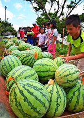 青空の下、約120個のスイカを収穫した津波小学校の児童たち=8日、大宜味村津波・同小