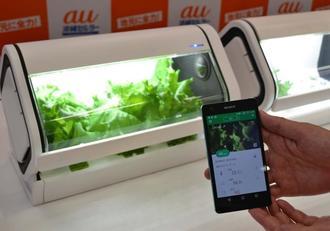 IoT技術と植物工場のノウハウを合わせた家庭用水耕栽培キット「やさい物語」=那覇市・沖縄セルラー電話
