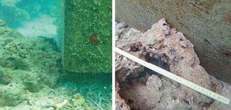 沖縄県が潜水調査で撮影した岩礁破砕許可区域外のコンクリートブロック周辺の状況=名護市辺野古沖(県提供)