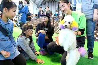 ペットカーニバルで、中部農林高校のセラピー犬と遊ぶ子どもたち=9日、宜野湾市・沖縄コンベンションセンター(下地広也撮影)