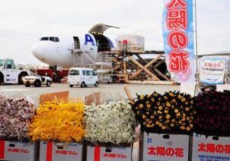 ANAカーゴの臨時便で羽田へ輸送されたキク=20日、那覇空港